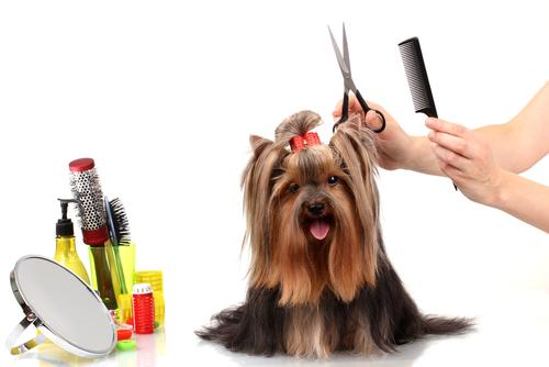 Truques e conselhos para escovar seu cão