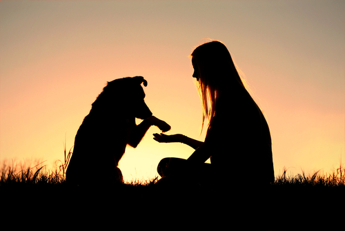 Coisas que você provavelmente não sabia sobre o seu cachorro