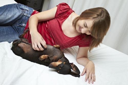 Cães arranham precisam ter as unhas aparadas constantemente
