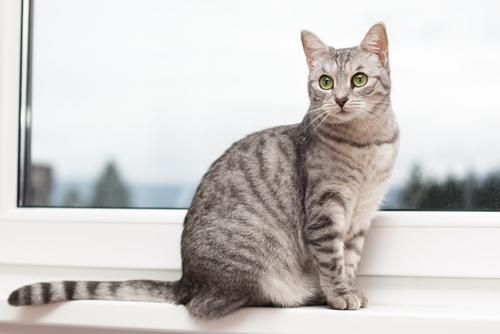 Reconheça os sinais do rabo do seu gato