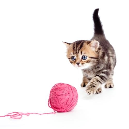 Veja o que quer dizer o movimento do rabo do seu gato
