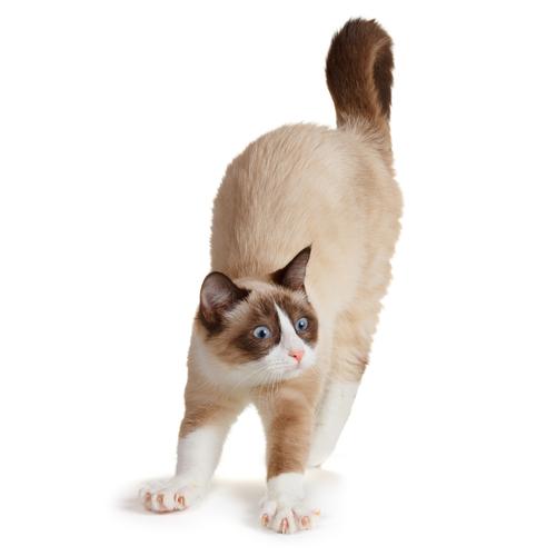 O que o rabo do seu gato está dizendo?