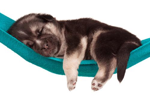 O sonho dos cães. Você já parou para observar como os cachorros dormem?