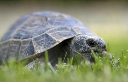 Como cuidar de uma tartaruga