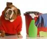 odor de urina de cachorro