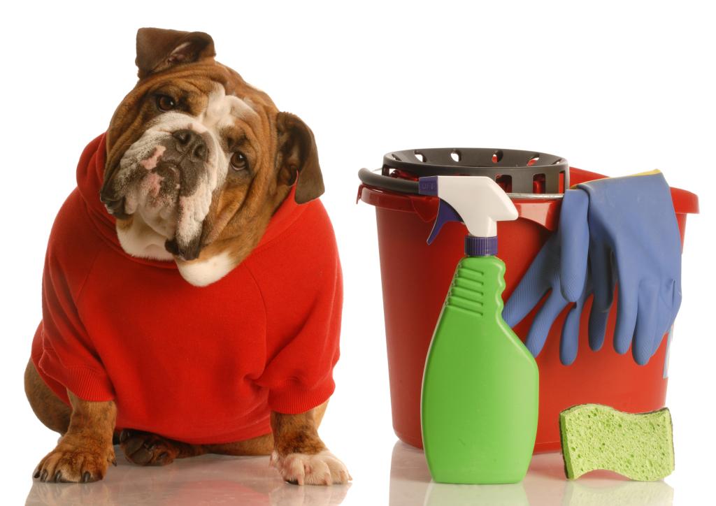 Elimine o odor de urina de cachorro naturalmente