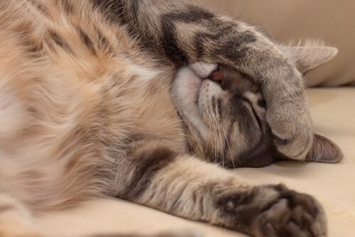 Sintomas da aids felina