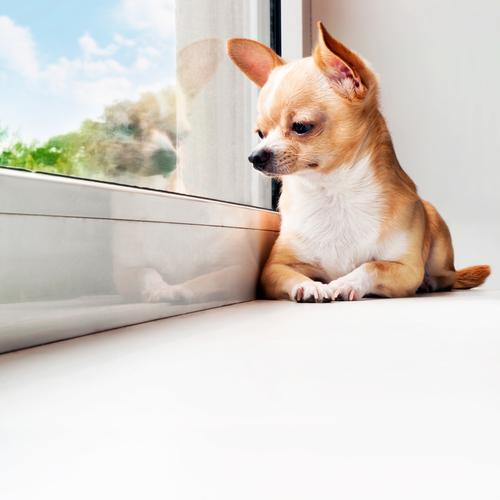 Saiba como controlar a ansiedade dos cães