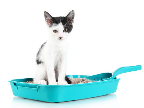 Saiba qual o melhor tipo de areia para gatos