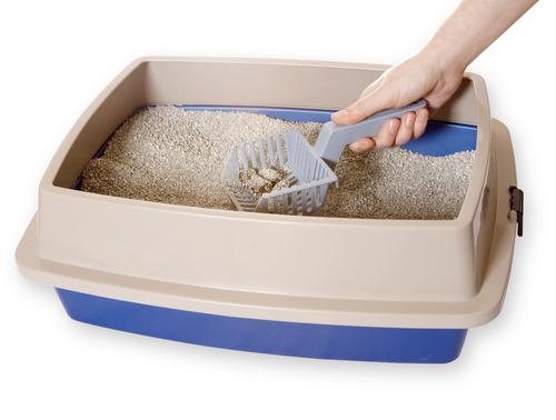 Recomendação de areia para gatos