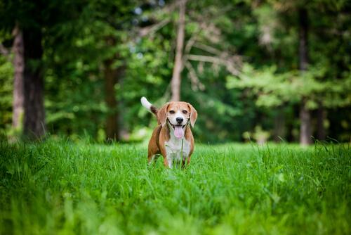 5 coisas muito simples que vão deixar seu cachorro feliz