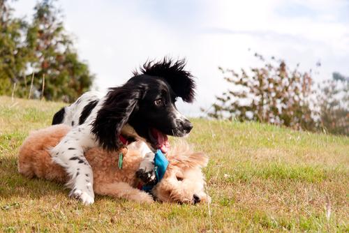 Importância de brincar com seu cão