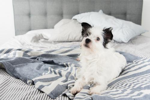 Parasitas em cachorros… diferenciá-los para eliminá-los!