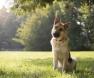 cão-inclina-cabeça