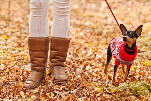 Coisas que você deve evitar fazer com seu cão no inverno