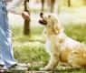 cão-obedece-chamado