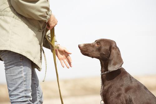 cão-obedece-chamado2