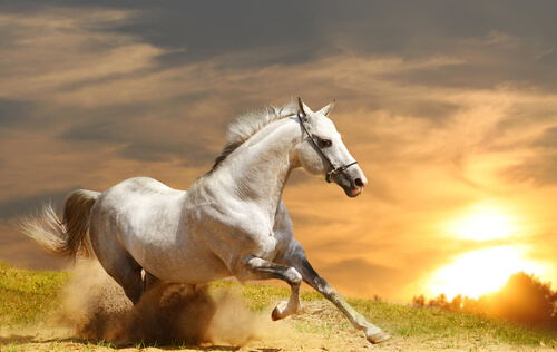 As origens dos cavalos, quer conhecê-las?