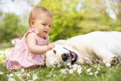 Bichinhos de estimação para crianças, a melhor companhia para brincar
