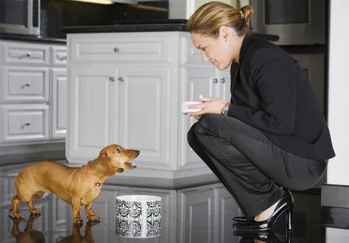 Como evitar que seu cachorro peça comida enquanto você come