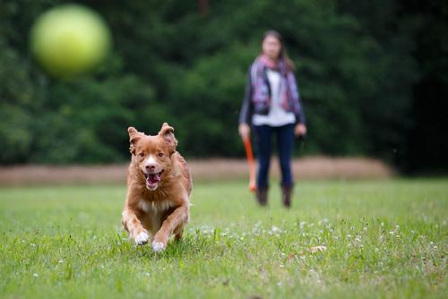 cachorro-correndo