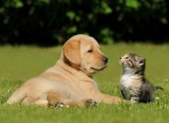 cachorro-e-gato