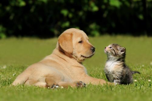 Você cuida bem do seu animal de estimação?