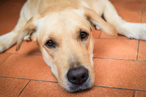 Os cuidados na velhice dos cachorros