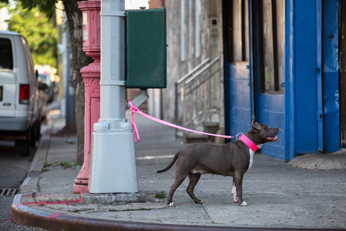 Razões para nunca deixar um cachorro amarrado na rua