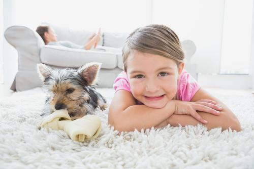 Estudo confirma que cães querem brinquedos novos
