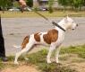 cachorrocomcoleira