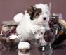 cachorrocomechocolate