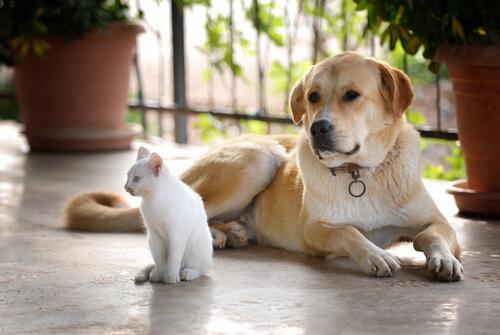 A surdez em cães e gatos... O que podemos fazer?