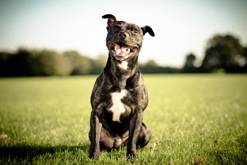 Você acredita que os cachorros sorriem?
