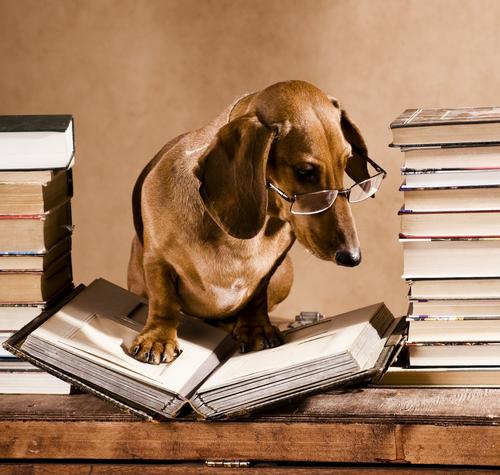 Os cães na literatura