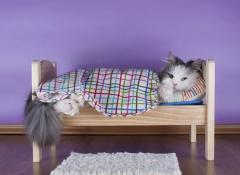 cama-gato