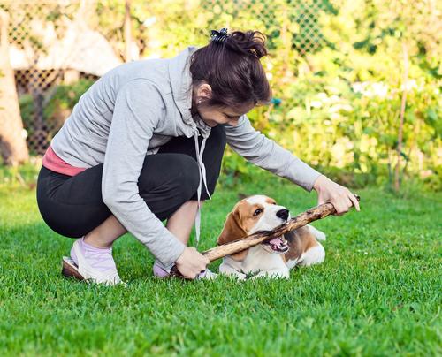 A importância de brincar com o seu cão