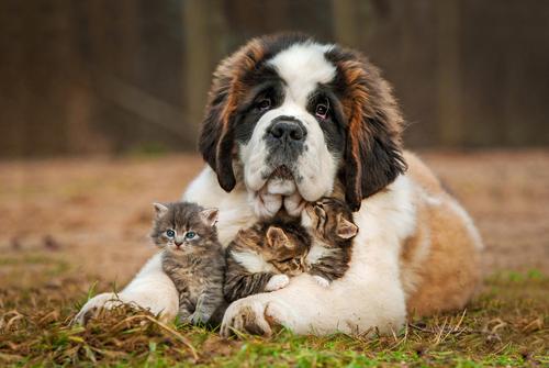 """O ditado """"se dão como cão e gato"""" tem sentido?"""
