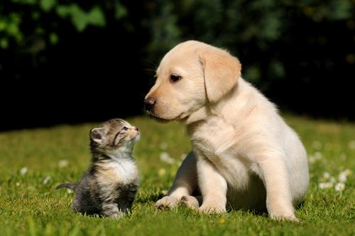 Comparação de inteligência entre gatos e cachorros