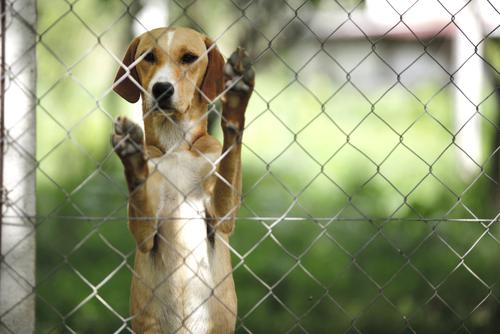 O abandono animal
