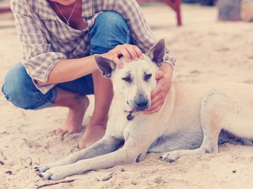 Raças de cachorros que fazem de tudo para agradar os donos