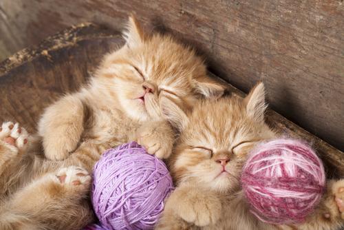 Cuidados com os gatos no frio