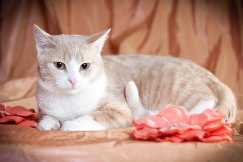 A personalidade dos gatos