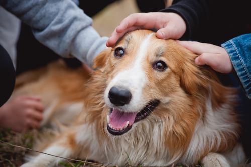 Os sentimentos dos cachorros