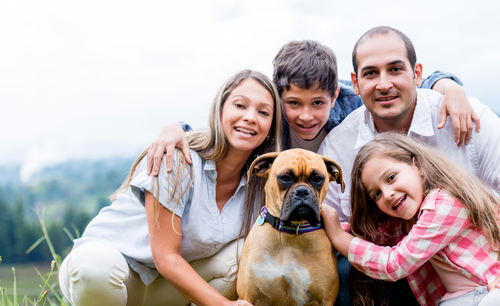 Como ajudar na adaptação do cão em seu novo lar