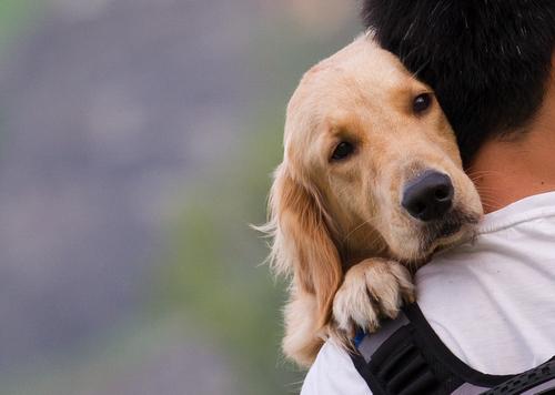 Os cães sentem amor?