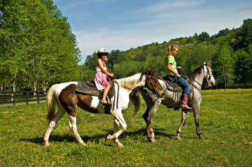 A equoterapia: os cavalos ajudam