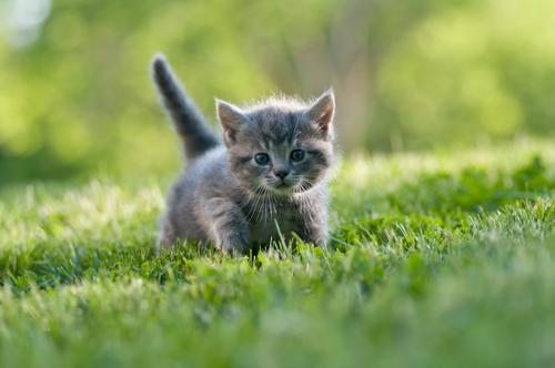 O que você deve saber antes de ter um gato