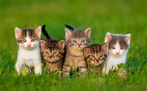 Como devemos agir com um gatinho recém chegado em casa  500fa03f9a