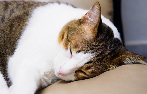 Gatos que saem de casa: De olho na vermifugação